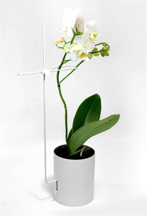 stem holding flower planters orchid pot