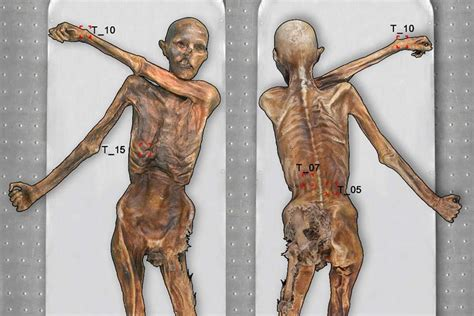 iceman tattoo otzi the 5 300 year mummified iceman had 61