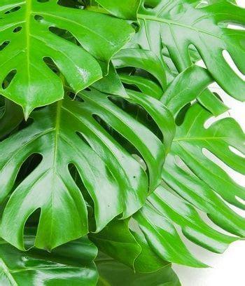 engrais plante d int rieur les 25 meilleures id 233 es de la cat 233 gorie plante d int 233 rieur