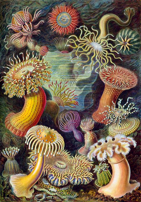 the and science of ernst haeckel multilingual edition books 100 beautiful illustrations of biologist ernst haeckel