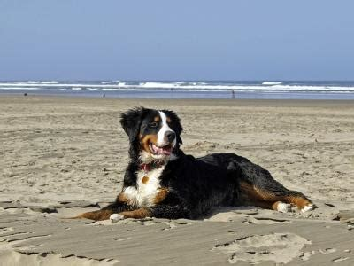 remedies for arthritis in dogs new remedy for arthritis in dogs emaxhealth