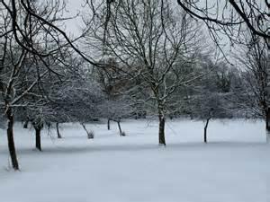 picture of snow file snow scene jpg