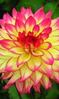 2214 Best Everything Plants And Flowers Images On Pinterest 17 Best Ideas About Colorful Flowers On Pinterest What