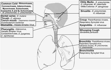 Diseases Caused By Viruses In Plants - respiratory tract infections upper respiratory tract infections
