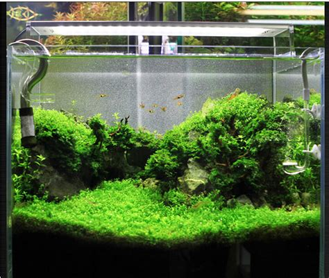 aquascape products aquascape products 20 images pond fish scale platinum ogon 250 watt thermo pond