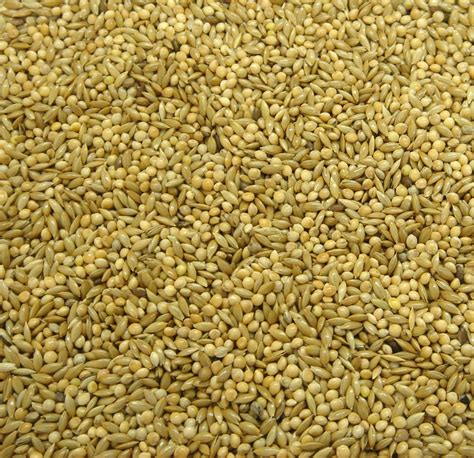 millet bird seed mix sunflower types