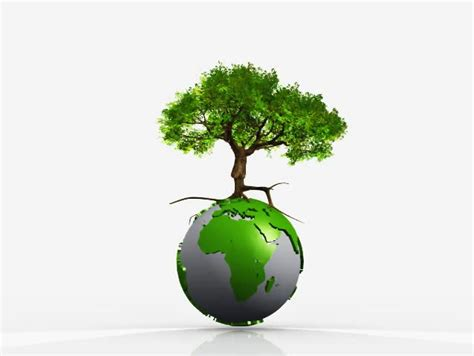 earth globe spinning  growing tree  white background