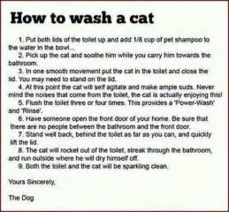 washing the cat