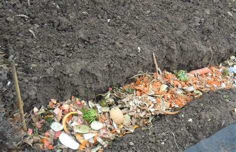 Composting For A Vegetable Garden What Manure Is Best For Vegetable Gardening