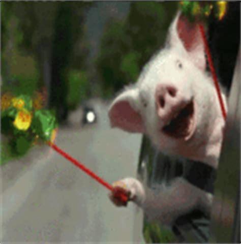 membuat gif lucu gambar animasi binatang hewan lucu game dan gambar