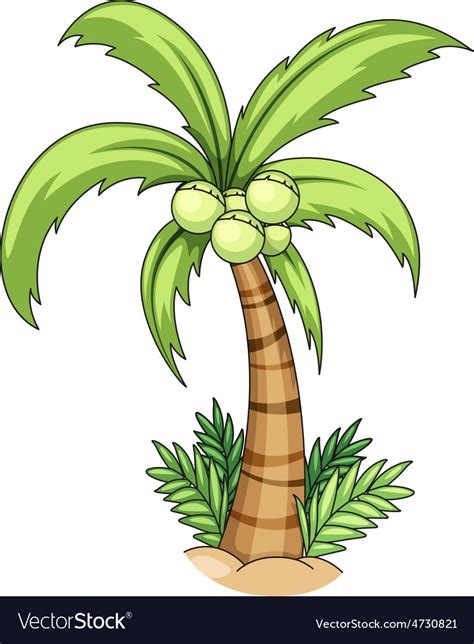 vector stock images coconut tree royalty free vector image vectorstock