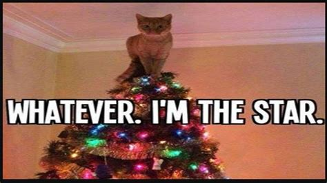 funny cats in christmas trees cats vs trees cats compilation
