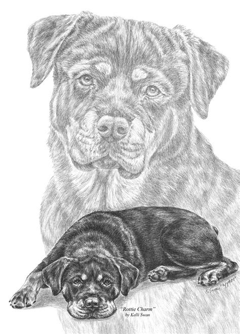rottweiler coloring book pin rottweiler coloring pages kentbaby on