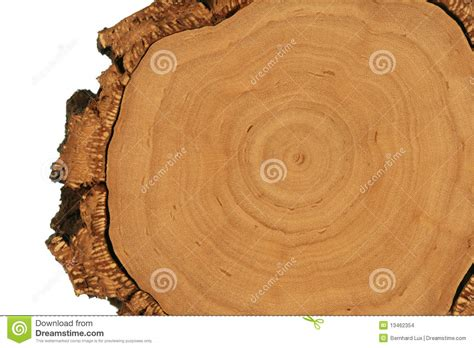 tree cross section tree cross section stock images image 13462354