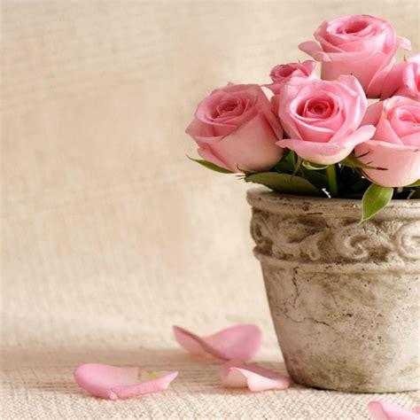 wallpaper flower pot flower pot in front of wall hd wallpaper hd latest