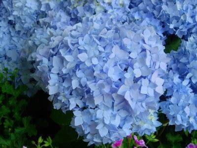 fiori in villa modena weekend di pasqua a modena tra arte gastronomia fiori e