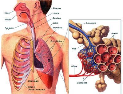 Did Pneumonia Kill Smith by Legionnaires Disease Legionella Pneumonia Pulmonary