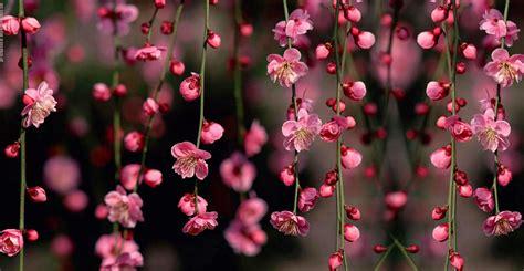 imagenes de flores wallpaper flores fondos twitter imagui