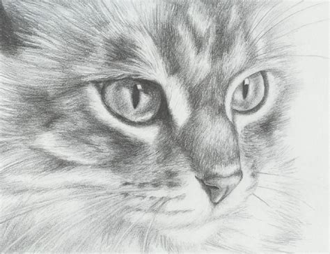 cat and drawing 10 cat drawings showcase hative