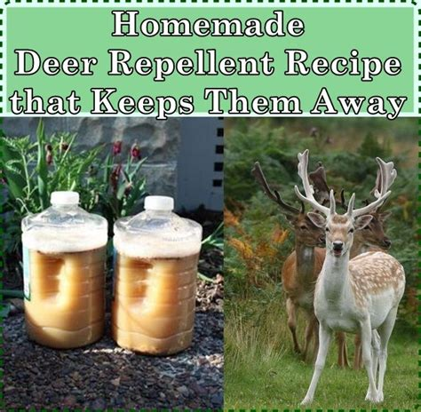 Deer Repellent For Gardens by 17 Best Images About Pest The Homestead Survival