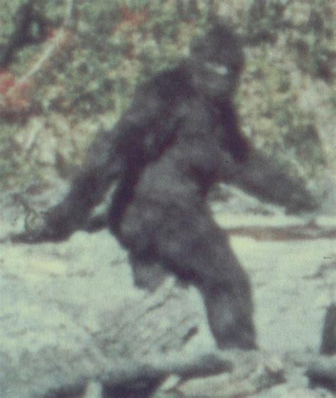 sasquatch evidence