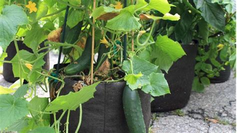 top 10 best products for urban vegetable gardens