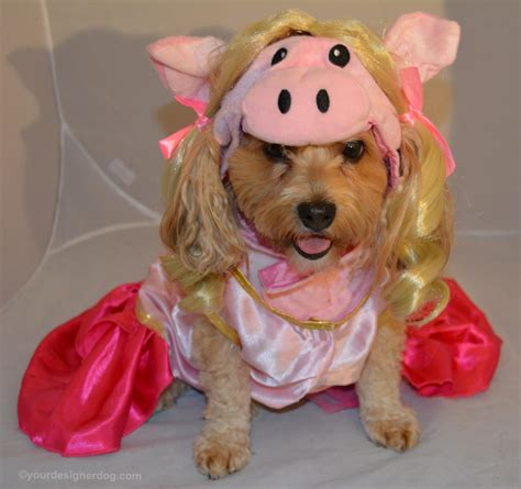 pig costume for pig costumes for dogs costume model ideas beds and costumes