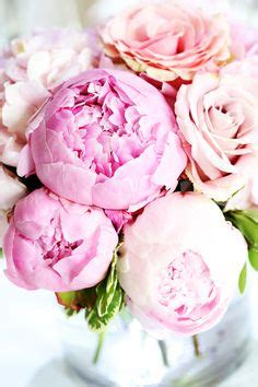 pink peonies photograph by ruby hummersmith 1000 images about moxiepix photos by dana on pinterest