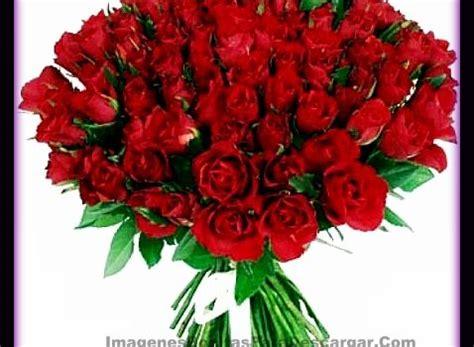 imagenes de flores rojas grandes fotos de ramos de rosas rojas grandes frases de