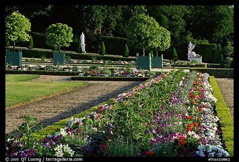 plants for formal gardens picture photo flowers in formal gardens of the versailles