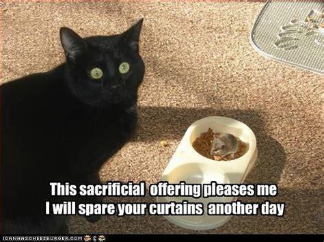 56 best images about basement cat vs ceiling cat on