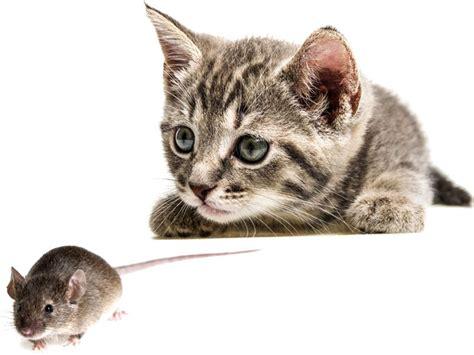 come debellare le talpe in giardino piante allontanano i topi cespuglio fiorito di