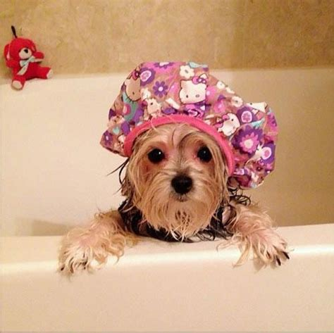 shower cap animals