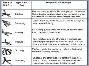 can you predict a bird s lifestyle based on its feet
