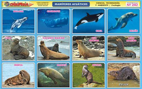 100 ejemplos de animales terrestres y acuticos animalnature mam 237 feros terrestres acu 225 ticos y voladores