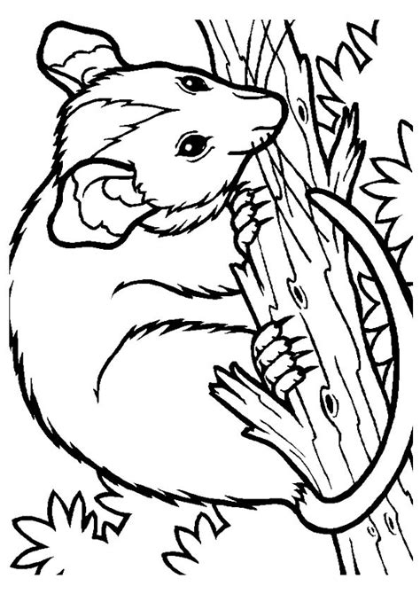 40 Coloring Page by Free 40 Possum Coloring A Possum Coloring Page 43026