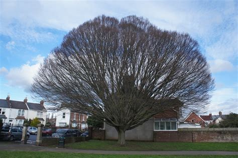 cluster exeter 9 tree about exeter trees shrubs exeter trees shrubs