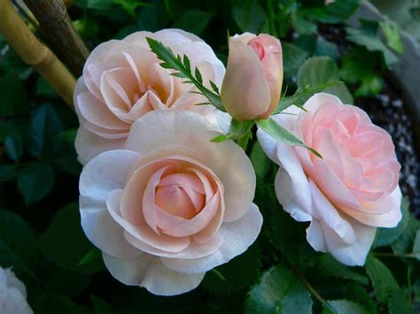 imagenes de flores bonitas para facebook im 225 genes de flores bonitas vol 12 20 fotos imagenes