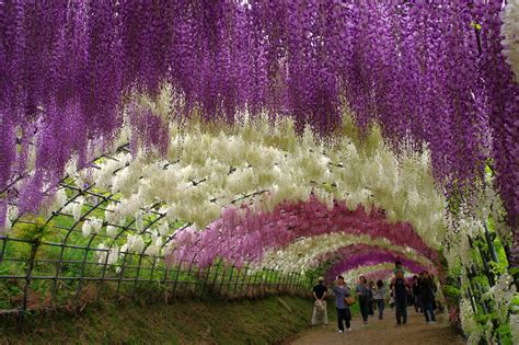 japan flower tunnel amazing places in the world favorite asia hotel