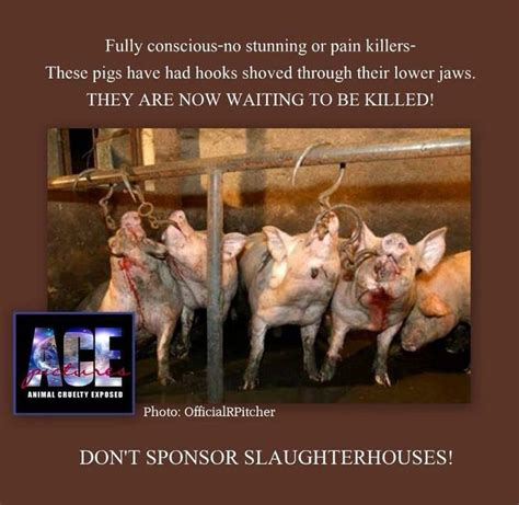 are pigs smarter than dogs pin by rudin on stop factory farming