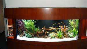 transform the way your home looks using a fish tank fish