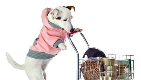 best place to find puppies pets on a budget best places to find cheap products top tips