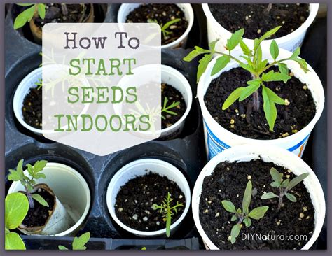 growing herbs indoors from seeds how to start seeds tips for growing indoors