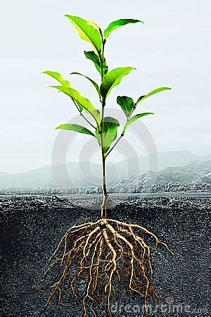 Läuse Auf Pflanzen 3917 by Cross Section Of Soil With A Green Plant Stock Photo