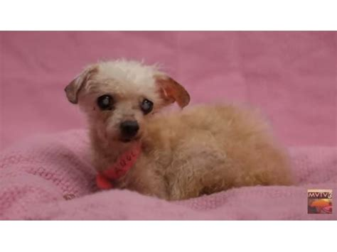 Small Dogs Need Home 20 Small Dogs Abandoned At Moval Animal Shelter Need Homes