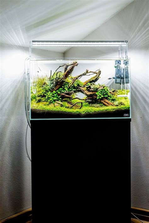 design filter aquascape 67 best images about aquascaping inspiration on pinterest