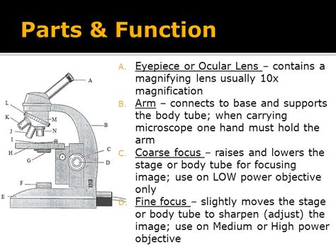 light microscope parts and functions compound light microscope ppt video online download