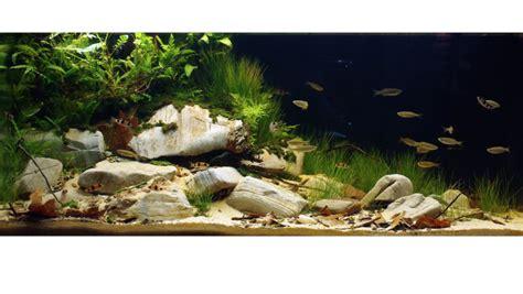 aquarium design competition enter the biotope aquarium design contest practical