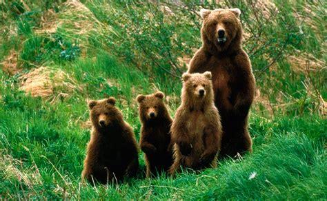 Imagenes De La Familia De Osos | familia de osos im 225 genes y fotos