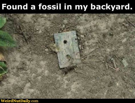 in my backyard funny pictures weirdnutdaily backyard fossil